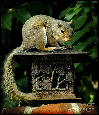 Photograph - Looking For Nuts by James C Thomas