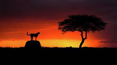 Masai Mara Photograph - Looking For Something by Faisal Alnomas
