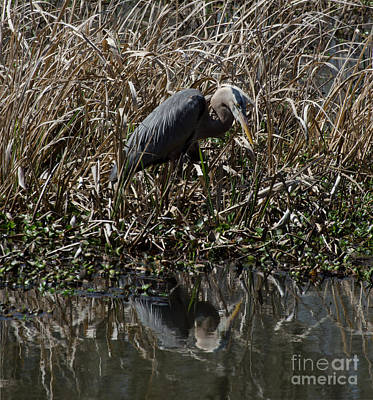 Photograph - Looking For Supper by Donna Brown