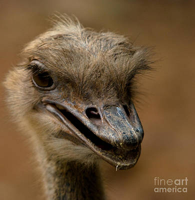 Ostrich Photograph - Looking For Trouble by Venetta Archer