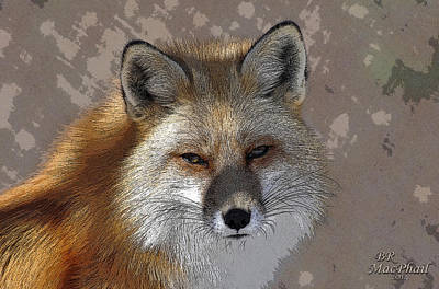 Looking Foxy Art Print by Barbara R MacPhail