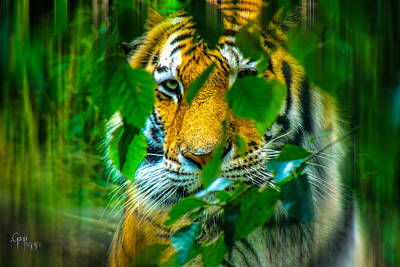 Looking Into My Soul Art Print by Glenn Feron
