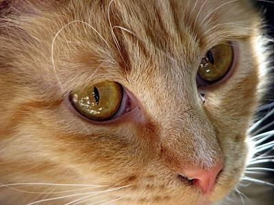 Looking Love In The Eye Art Print by Chris Gudger