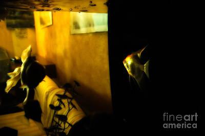 Fish Bowl Photograph - Looking Out by Silvia Ganora