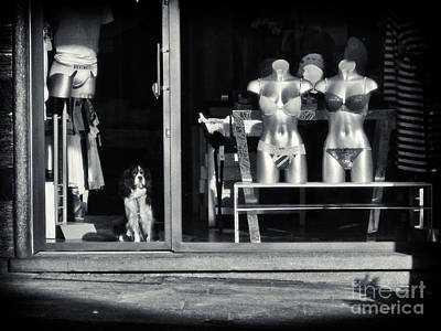 Photograph - Looking Out The Shoppe by Silvia Ganora