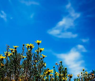 Photograph - Looking Skyward by Angela J Wright