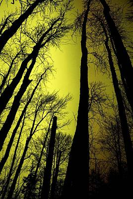 Looking Through The Naked Trees  Print by Jeff Swan
