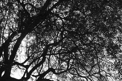 Black Top Digital Art - Looking Thru The Tree by Gina Dsgn