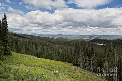 Photograph - Looking To The Canyon - Yellowstone by Belinda Greb