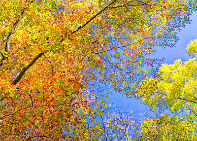 Photograph - Looking Up At Fall by Carolyn Derstine