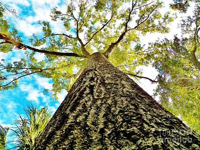 Photograph - Looking Up Florida Sky And Tree by Judy Via-Wolff