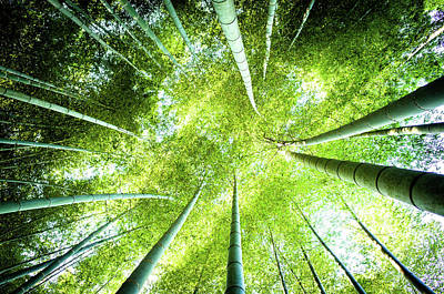 Looking Up In The Bamboo Grove Art Print by Marser