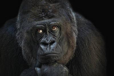 Animals Photos - Looking Up by Joachim G Pinkawa
