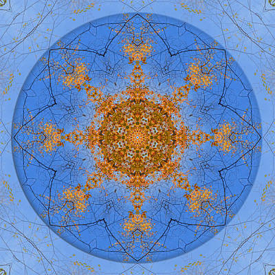 Photograph - Looking Up Mandala 2 by Beth Sawickie