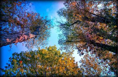 Photograph - Looking Up by Michaela Preston
