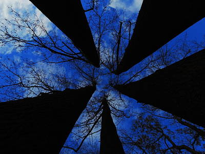 Photograph - Looking Up by Raymond Salani III