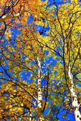 Photograph - Looking Up To Autumn 2 by Diane Alexander