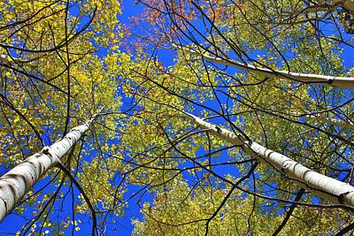 Photograph - Looking Up To Autumn by Diane Alexander