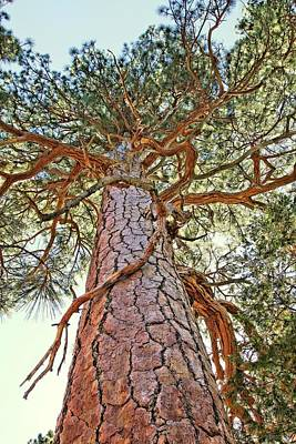 Photograph - Looking Up Tree by Jane Girardot