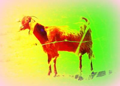 Belong Dead Photograph - Looks Like A Goat And Walks Like A Goat   by Hilde Widerberg