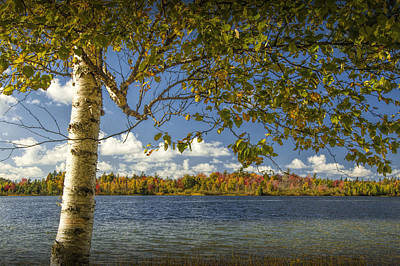 Loon Lake In Autumn With White Birch Tree Art Print by Randall Nyhof