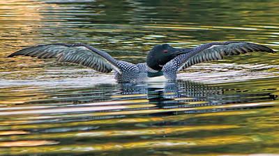 Loon Lake Winnisquam Original by Stephen Anthony