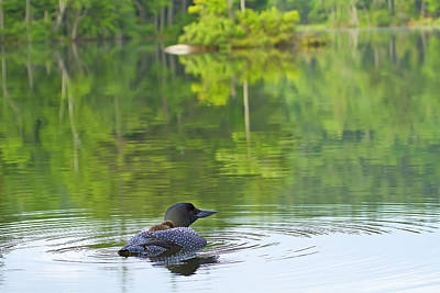 Photograph - Loon Solitude by John Vose