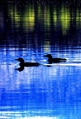 Photograph - Loons In Pittsburg by Will Boutin Photos