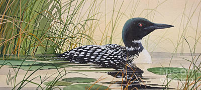 Loon Painting - Loon's Tranquil Shore by James Williamson