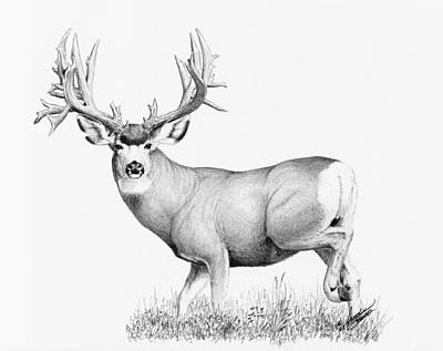 Painting - Lopez Buck by Darcy Tate