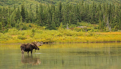 Bullheaded Photograph - Lord Of The Lake by Sandy Sisti
