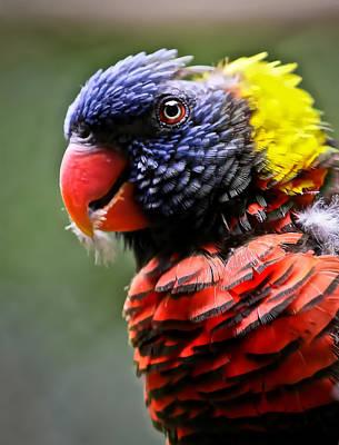 Photograph - Lorikeet Bird by Athena Mckinzie