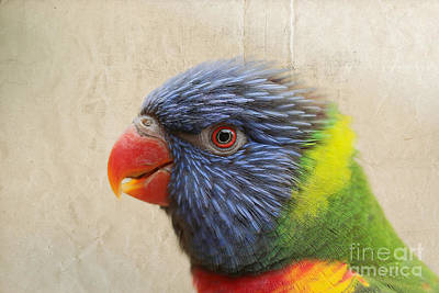 Photograph - Lorikeet Rainbow by Lisa Cockrell