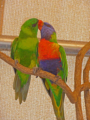 Photograph - Lorikeets Loving by Margie Avellino