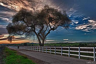 California Vineyard Digital Art - Los Alamos Vineyard Oak by Thomas Hall