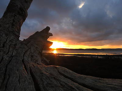 Photograph - Los Osos Driftwood by Paul Foutz