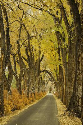 Los Poblanos Ranch Drive-001 Art Print
