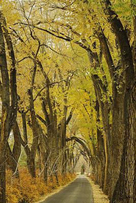 Los Poblanos Ranch Drive-002 Art Print