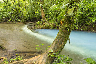 Tenorio Volcano National Park Photograph - Los Tenideros And Rounded Tree by Colin D Young