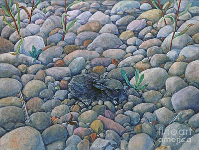 Lost And Found Rabbit Art Print