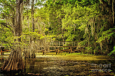 Photograph - Lost Bridge On Caddo Lake by Tamyra Ayles
