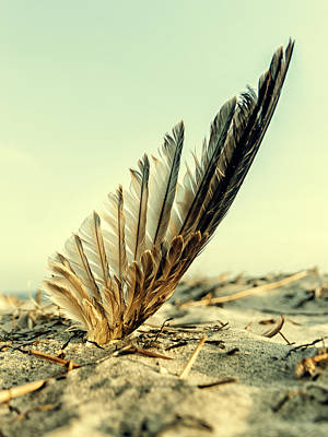 Lost Feather At The Beach Art Print by Mike Santis
