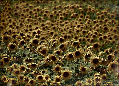 Lost In A Sunflower Patch Art Print