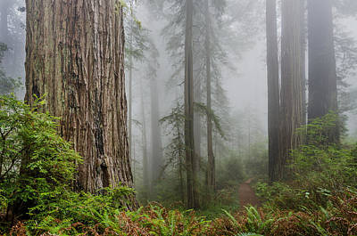 Photograph - Lost In The Mists by Greg Nyquist