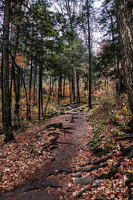 Art Print featuring the photograph Lost In Thought On The Blue Ridge Parkway Trail by Debbie Green