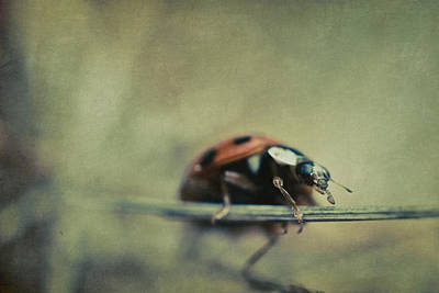 Lady Bug Photograph - Lost Lady by Shane Holsclaw
