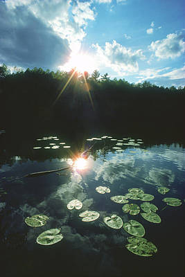 Water Photograph - Lost Lake Lilies by Bruce Thompson