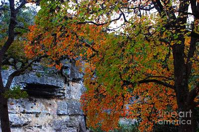 Fall Foliage At Lost Maples State Natural Area  Art Print