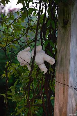 Photograph - Lost Sheep by Maria Urso