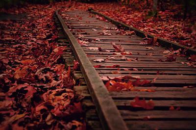 Maple Leaf Art Photograph - Lost Tracks by Studio Yuki
